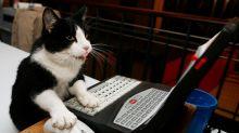 Animais agindo como humanos fazem sucesso no Twitter