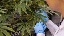 Cronos Soars on Report Altria in Talks to Buy Canada Pot Company