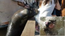 Terrifying Video Shows Sea Lion Dragging Young Girl Into Water