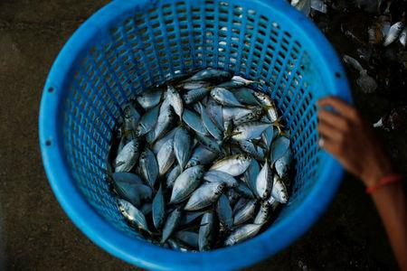 Fish are seen after catching at Samut Sakhon port in Thailand November 22, 2016. Picture taken November 22, 2016. REUTERS/Jorge Silva