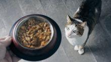Katzenfutter bei Stiftung Warentest: Nur die Hälfte ist empfehlenswert