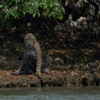 Environmental groups, big ag unite for Amazon in Brazil