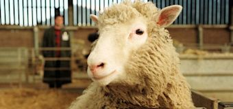 New findings on Dolly the cloned sheep