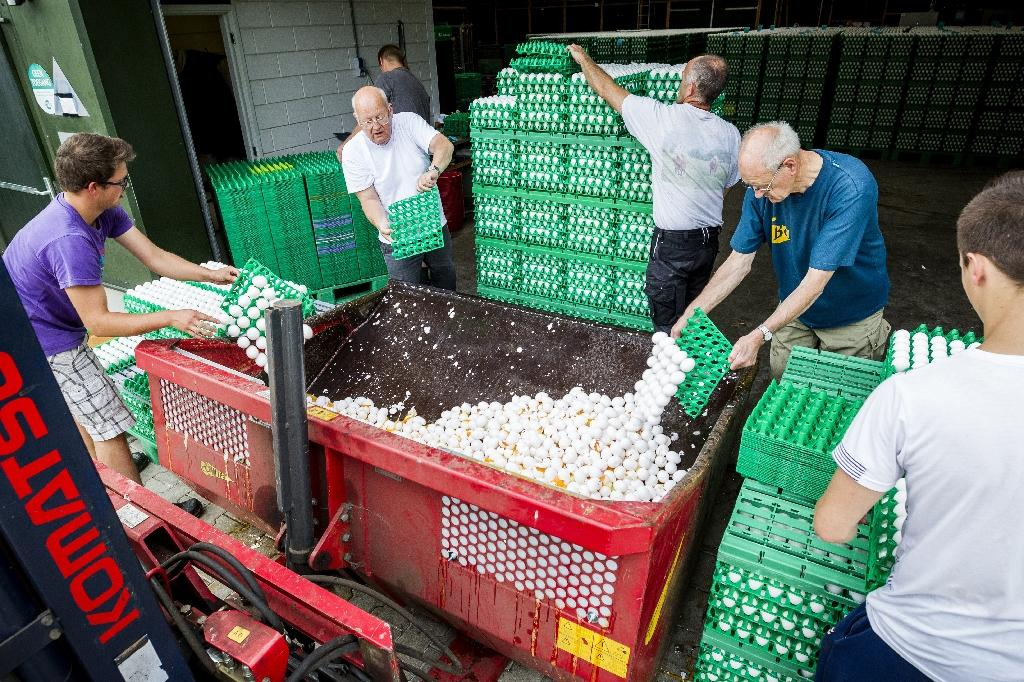 The contaminated eggs at the centre of the scandal have mainly come from the Netherlands, followed by Belgium and Germany. Dozens of farms have been shut (AFP Photo/Patrick HUISMAN)