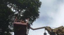 颱風少虎頭蜂窩變多 公路總局首次為摘蜂窩封路