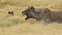 PHOTOS: Sojourn back to the landscapes and wildlife of Namibia