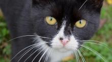 野貓釀哺乳類滅絕危機!澳洲建立世界最大「野貓防護欄」