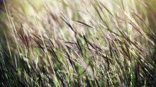Carte des pollens juillet 2021 : risque élevé d'allergie en Bretagne