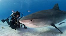 Eli Roth Directing Shark Documentary 'Fin' for Discovery Plus (EXCLUSIVE)