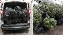 Yorkshire flood victims caught escaping in van filled with wet cannabis plants
