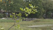 Montreal acquires land once slated for housing to expand L'Anse-à-l'Orme nature park