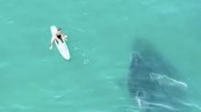 Incredible footage shows a baby humpback whale playfully tap a paddleboarder while swimming beside him