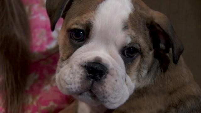 SWAT Team Helps Reunite Family With Stolen Puppy
