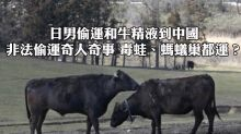 日男偷運和牛精液到中國 非法偷運奇人奇事 毒蛙、螞蟻巢都運?