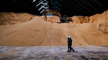 Sugar Reverses Four-Year High Amid Broader Commodities Decline
