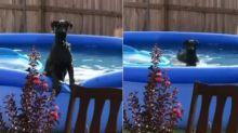 Boom en redes... la curiosa reacción de este perro al ser pillado por su dueño