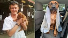 Loyal dog stays by dying owner's side for hours after horrific crash