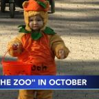 Boo at the Zoo will return this October, but masks and reservations are required