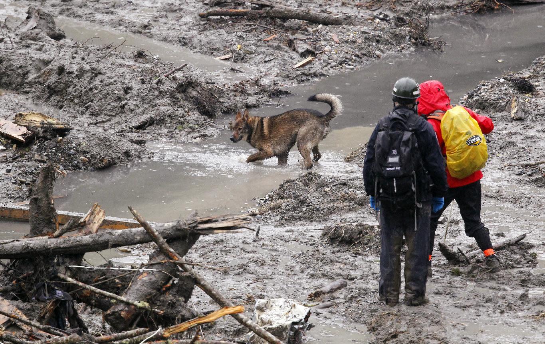 Rescatistas trabajan con el apoyo de un perro de búsqueda en el lugar donde ocurrió un mortífero desplazamiento de tierra, el sábado 29 de marzo de 2014, en Oso, Washington. (Foto AP/Elaine Thompson, Pool)