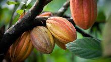 Del mito a la realidad: los beneficios del cacao para la salud