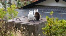 好溫馨!日本京都「哲学の道」貓貓惹幻想