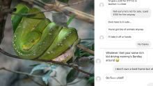 Things go south fast when man tries to buy snake off Instagram