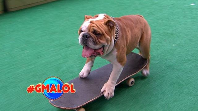 Dog Skateboards Down NYC Sidewalks