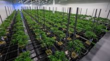 1933 Industries Commences Flowering Stage at New Cannabis Facility in Las Vegas