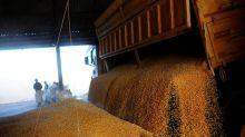 Conab corta previsão de safra de milho do Brasil 2020/21, mas vê oferta suficiente