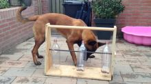 Dog figures out tricky bottle puzzle for treats