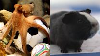Psychic animals predict World Cup winners
