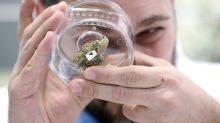 A look at where companies stand on marijuana business