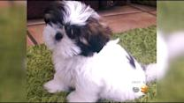 Family Offers Reward For Puppy Stolen In Burglary