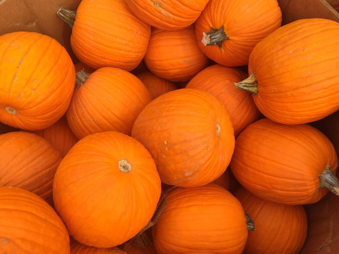 Got a favorite pumpkin patch near Chelmsford? Add it below.