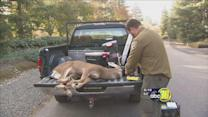 Officers safely capture a deer in Northeast Fresno