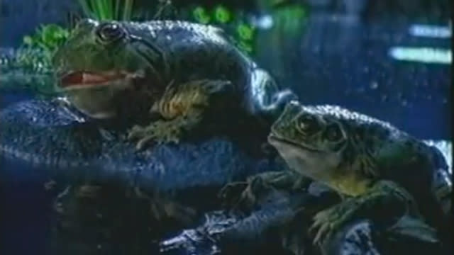 The Budweiser Frogs