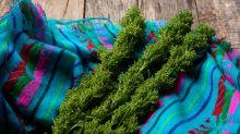 Hierbas mexicanas no sólo dan sabor sino que también curan