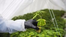 Alberta to return CannTrust products after Health Canada suspensions
