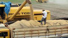 Cosecha de soja Brasil en campaña 2020/2021 llegaría a 129,98 millones toneladas: AgResource