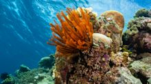 Are you sitting comfortably? Then we'll begin the evolutionary 'fairytale' of coral