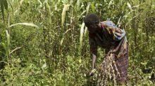 L'histoire de la région des Grands Lacs en Afrique vue à travers les plantes