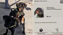 Volkswagen de México adopta perritos y los registra como empleados