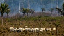 Report links world's top meat firm to deforestation