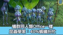 茶水間:40%螞蟻平時扮忙 你Office有幾多人又係咁?
