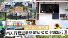 【出走台北】桃園兩天行程 賞向日葵花田 遊英式小鎮
