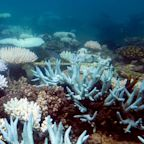 Almost a third of the Great Barrier Reef's coral died in 'catastrophic' heatwave, study finds