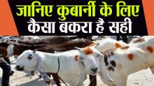 Bakrid 2020: Know if the Goat have any Defect then it Should be Sacrificed or Not