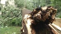 Day 2 of storms sends trees crashing down