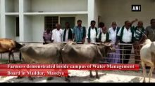 Farmers stage protest with cattle to demand for water in Karnataka's Mandya