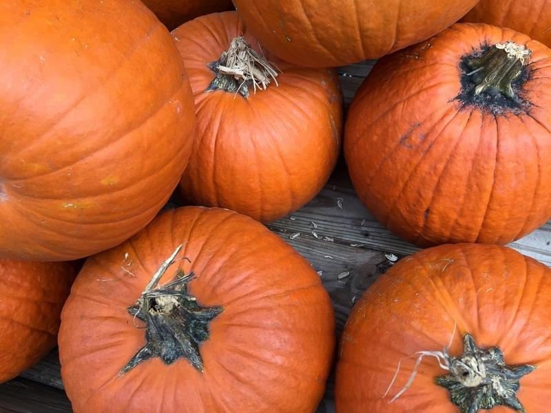 Picking out the perfect Halloween pumpkin is a special treat for children.